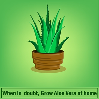 Grow Aloe Vera at Home