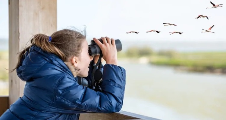 Best Binoculars for Bird Watching
