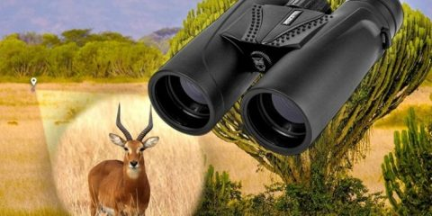 Best Binoculars for Elk and Deer Hunting